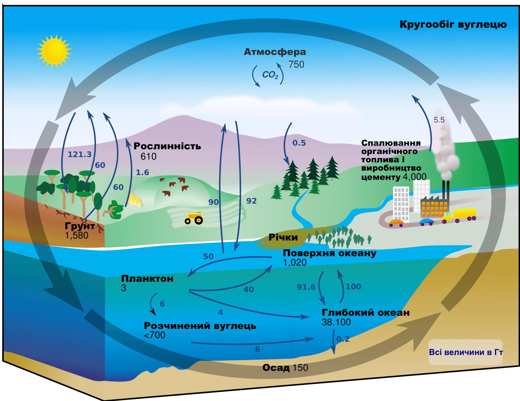 Схема круговороту кисню в природі