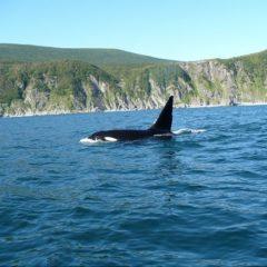 Природні ресурси Канади – види, характеристика і оцінка ресурсів