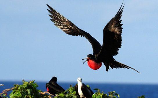 Морські птахи - назви і фото, види сімейства.  Нелітаючі і літаючі морські птіци0