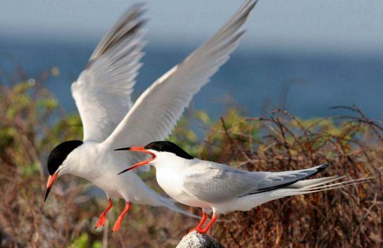Морські птахи - назви і фото, види сімейства.  Нелітаючі і літаючі морські птіци60