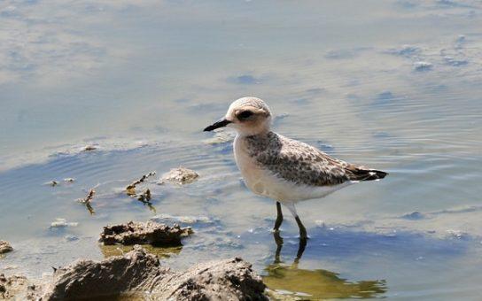 Морські птахи - назви і фото, види сімейства.  Нелітаючі і літаючі морські птіци53
