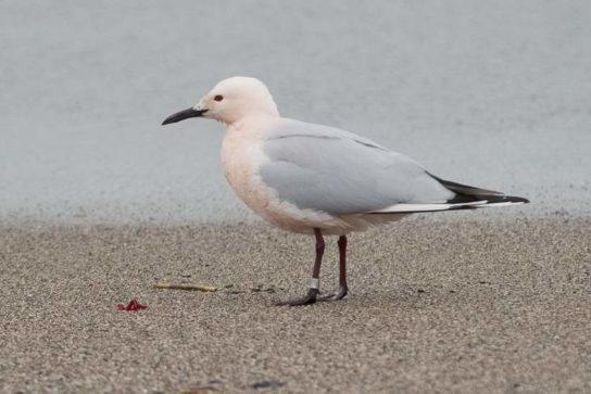 Морські птахи - назви і фото, види сімейства.  Нелітаючі і літаючі морські птіци84