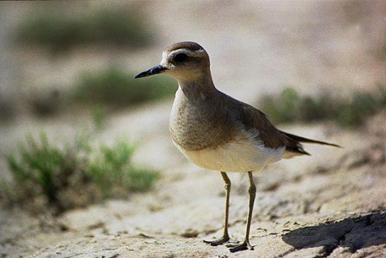 Морські птахи - назви і фото, види сімейства.  Нелітаючі і літаючі морські птіци52