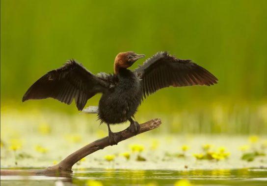 Морські птахи - назви і фото, види сімейства.  Нелітаючі і літаючі морські птіци18