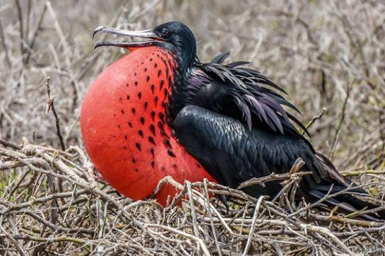 Морські птахи - назви і фото, види сімейства.  Нелітаючі і літаючі морські птіци2