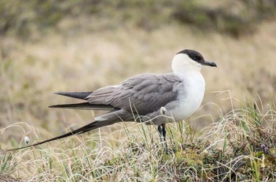 Морські птахи - назви і фото, види сімейства.  Нелітаючі і літаючі морські птіци88