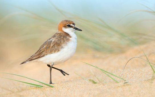 Морські птахи - назви і фото, види сімейства.  Нелітаючі і літаючі морські птіци50