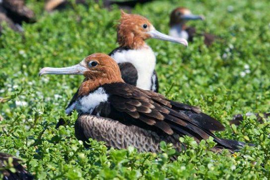 Морські птахи - назви і фото, види сімейства.  Нелітаючі і літаючі морські птіци3