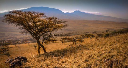 Субекваторіальний кліматичний пояс – країни, природні зони, опис, опади, температура, флора і фауна