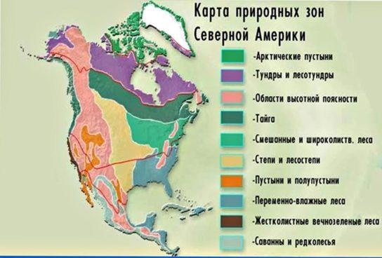 Природні зони Північної Америки – таблиця і карта, тварини і рослини, опис і особливості