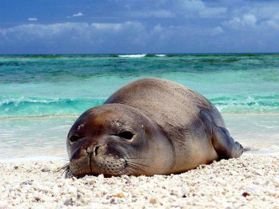 Тюлень - фото і види сімейства, відео і картинки тварини, як виглядає і де обітает1