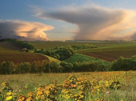 Степи і Лісостепи – природа, зони, особливості, характеристики, клімат