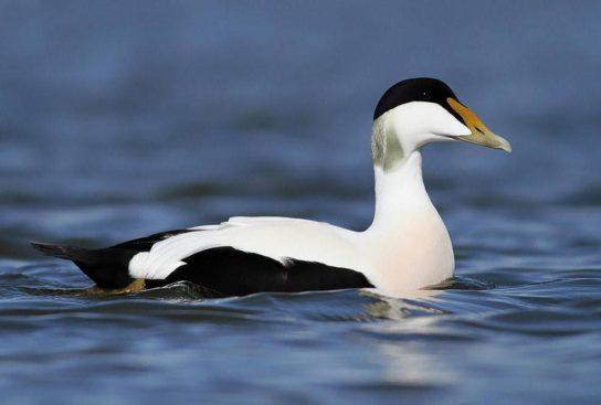 Тварини Північного Льодовитого океану - риби, птахи, ссавці |  Фото з названіямі17
