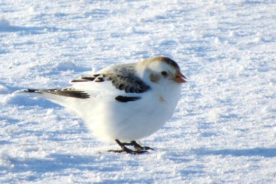 Тварини Північного Льодовитого океану - риби, птахи, ссавці |  Фото з названіямі20