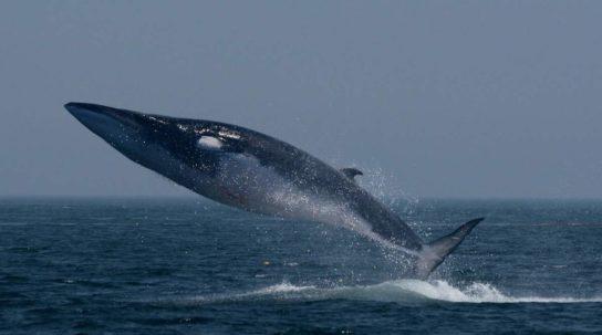 Тварини Північного Льодовитого океану - риби, птахи, ссавці |  Фото з названіямі11
