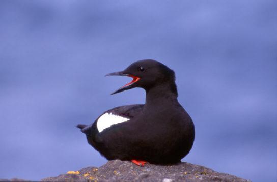 Тварини Північного Льодовитого океану - риби, птахи, ссавці |  Фото з названіямі21