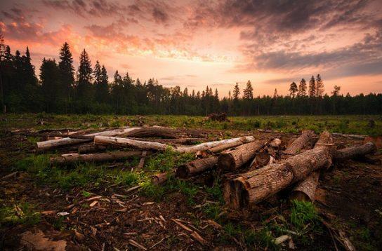 вирубка лісів - причини2