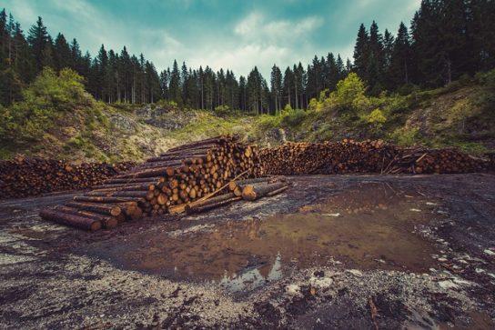 наслідки вирубки лісів3