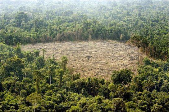 Вирубка лісів Амазонки5