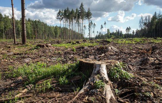 Вирубка лісів – проблема, наслідки та шляхи вирішення