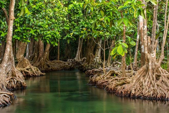 Краса мангрових лісів