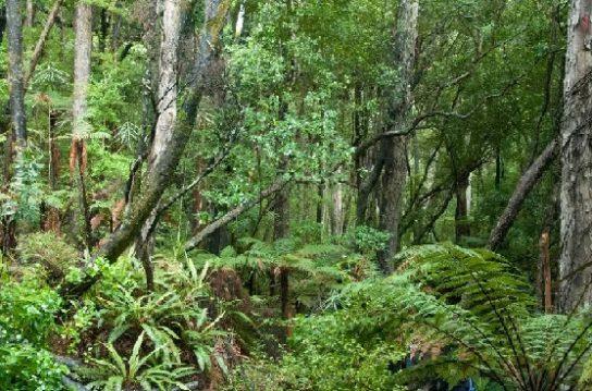 Вологі екваторіальні ліси на карті – клімат, стан, ознаки та природні зони