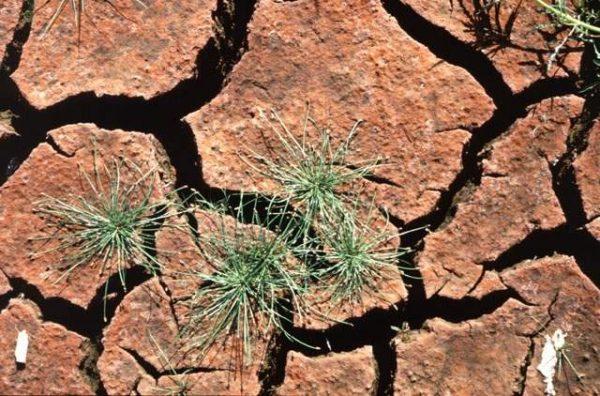 Ерозія Ґрунту – Водна Та Вітрова | Види Ерозії Ґрунтів, Причини Та Захист