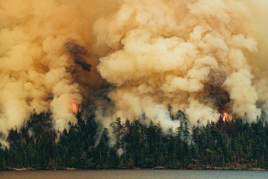 Лісові пожежі – гасіння, наслідки та причини виникнення