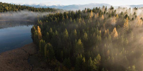 4 речі, які може зробити кожен, щоб допомогти зберегти ліс