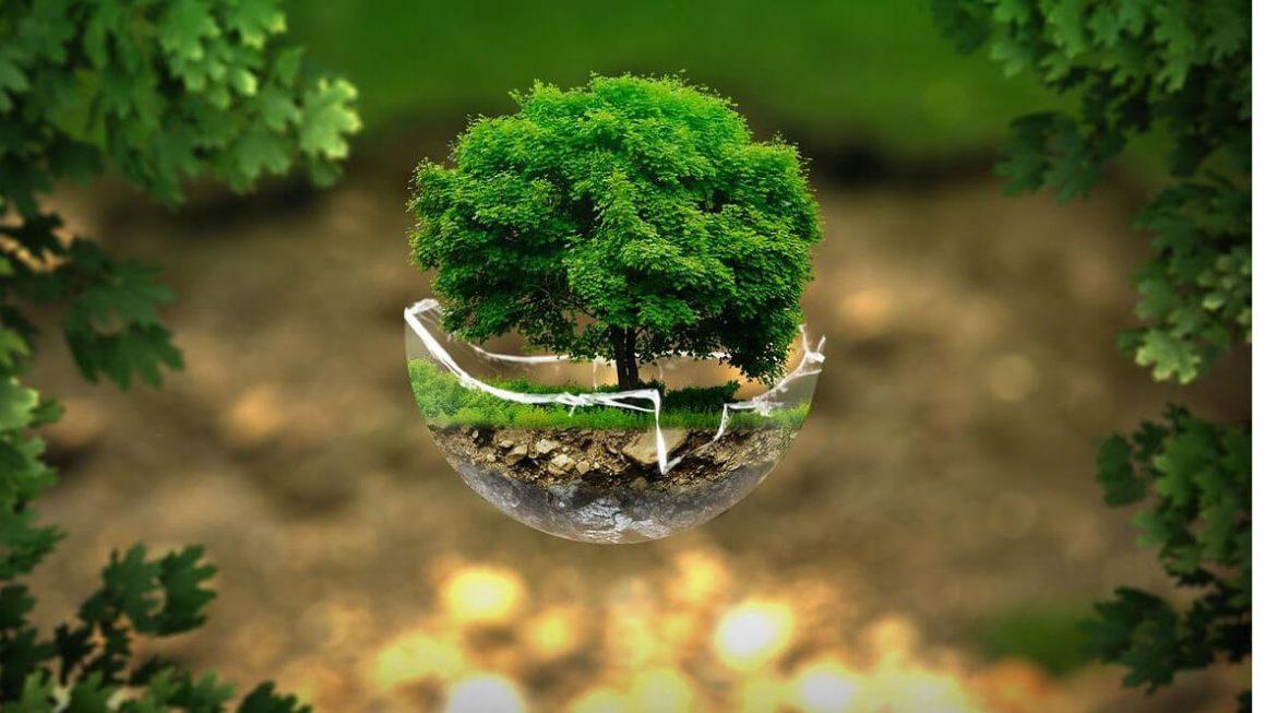 Екологія - чому вона така важлива для навколишнього середовища