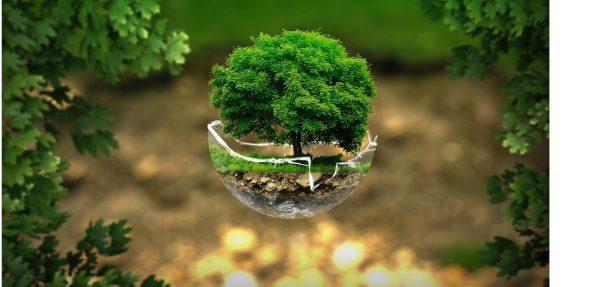 Екологія – чому вона така важлива для навколишнього середовища?