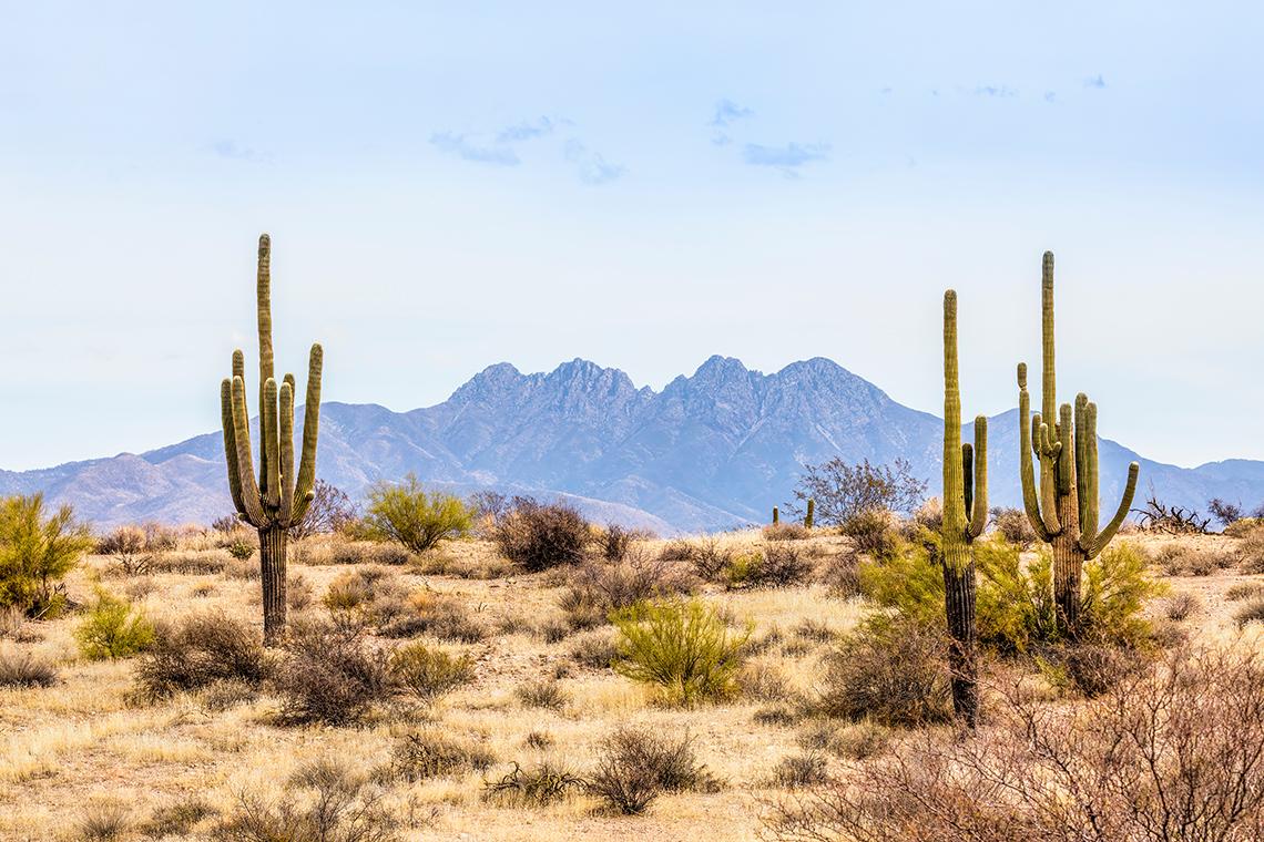 рослини пустелі