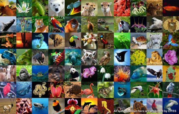 Що таке біорізноманіття?