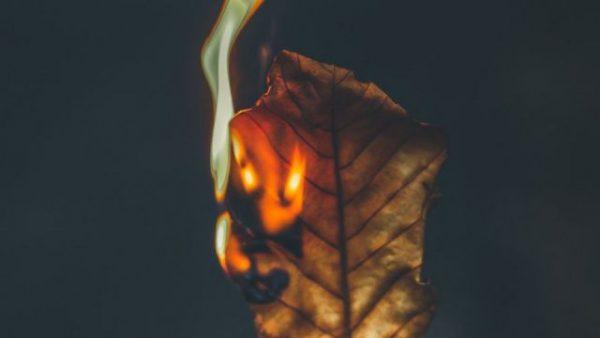 Чому не можна палити листя і до чого це призводить