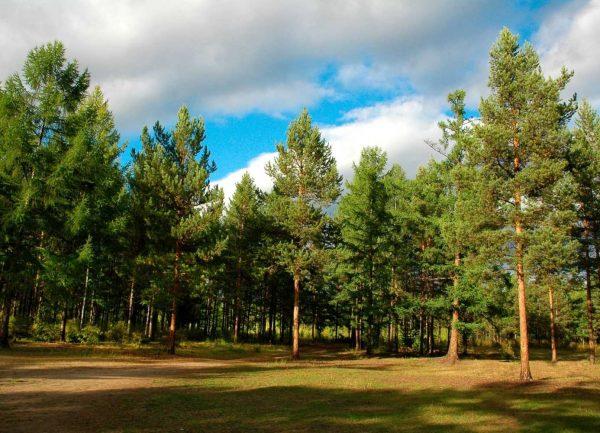Проект чому ліси називають легенями планети