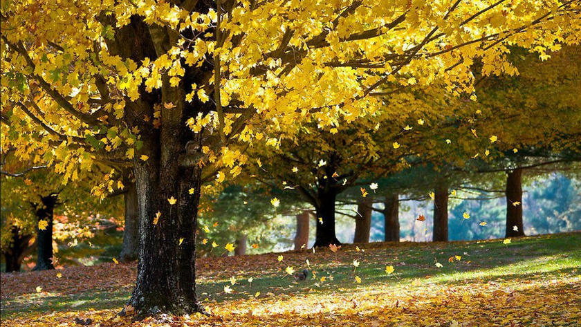 опад листя